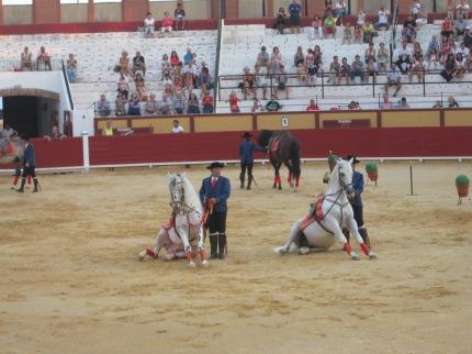 Caballos de Andalucia 050